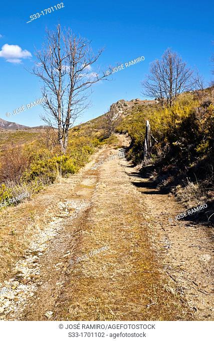 Road in the Cabezuelo  Sierra Norte  Peñalba de la Sierra  Guadalajara  Castilla la Mancha  Spain
