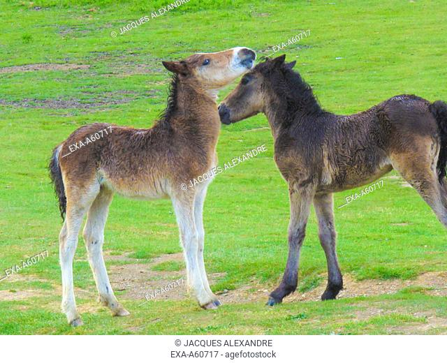 Two foal standing together on field