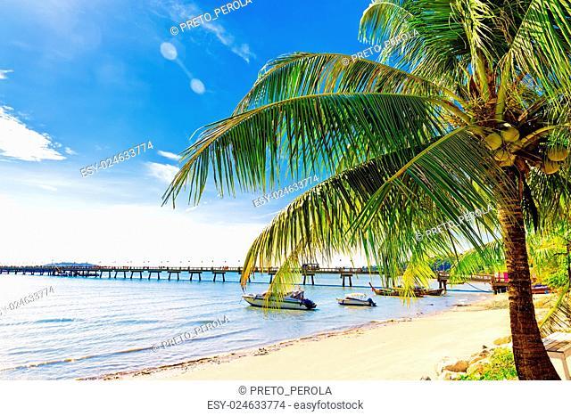 Palm tree in tropical perfect beach at Phuket. Thailand