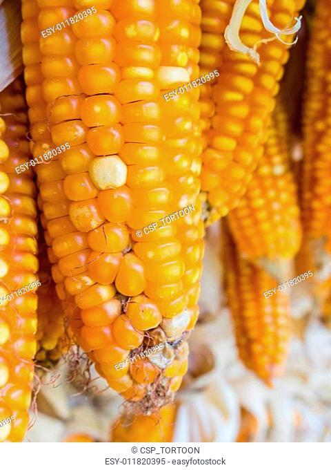 Fungi diseases in corn postharvest