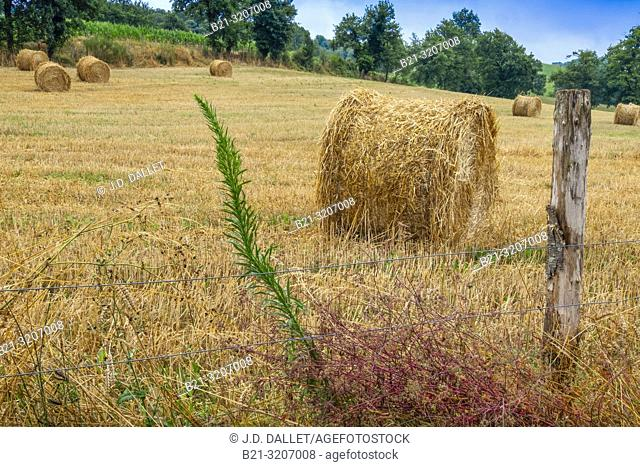 France, Auvergne, Cantal, after the harvest at Saint Constant