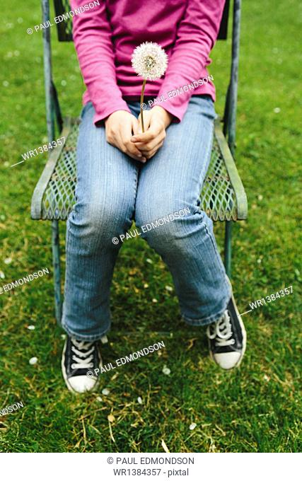 A ten year old girl sitting in chair on lush, green grass, holding a dandelion clock seedhead. Cropped view from the neck down