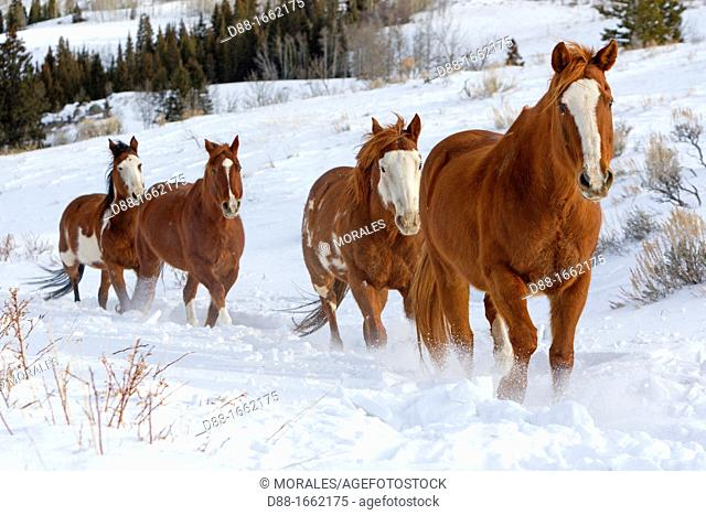 United States , Wyoming , Shell, The Hideout Guest Ranch , Horses