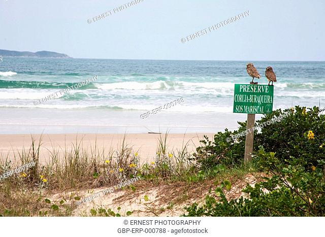 beach; sea, plate, 2011, Santa Catarina, Brazil