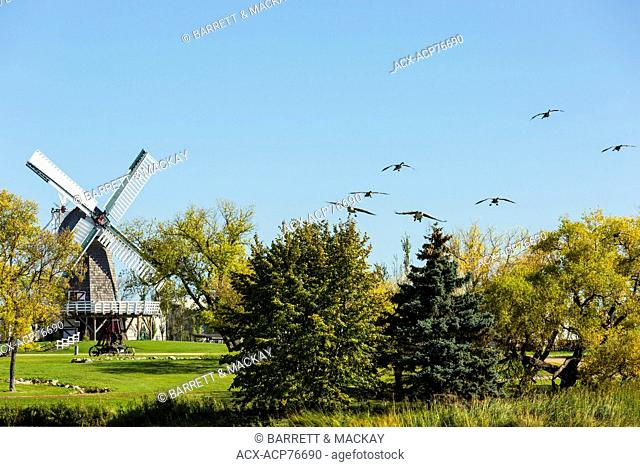Migrating Canada Geese and Wooden windmill, Mennonite Heritage Village, Steinbach, Manitoba, Canada