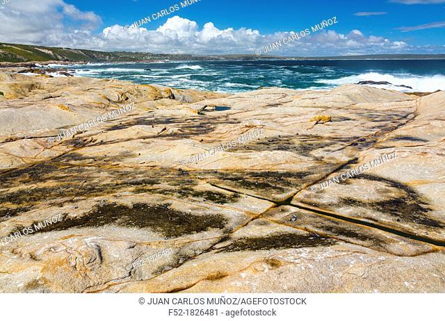 Cape Columbine Nature Reserve, West Coast Peninsula, Western Cape province, South Africa, Africa