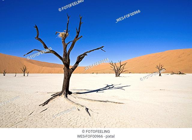 Africa, Namibia, Deadvlei, Dead trees in the desert