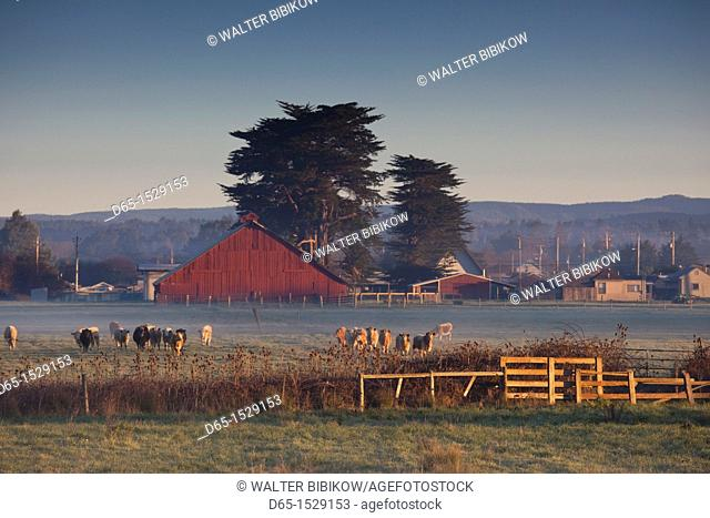 USA, California, Northern California, North Coast, Arcata, farm view, dawn
