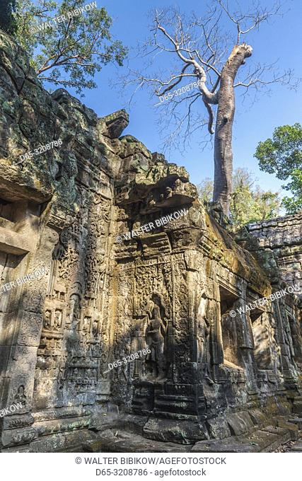 Cambodia, Angkor, Ta Prohm, temple tree
