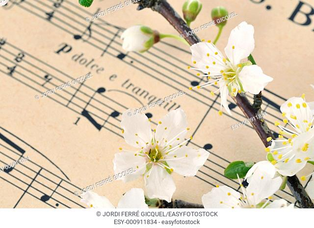 cherry blossoms on an old sheet music