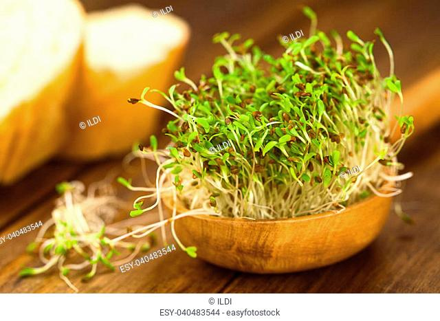 Sprouted alfalfa seeds on wooden spoon (Very Shallow Depth of Field, Focus on sprouts in the front)
