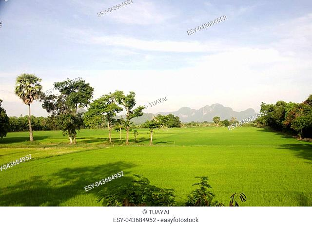 Khao Oktalu Mountain or The Hole Mountain with rice field or paddy at Phatthalung province of southern Thailand