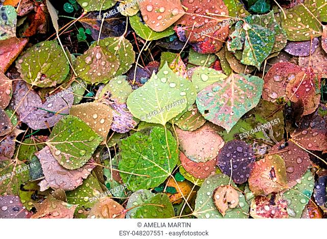 A background of vibrant leaves on the ground