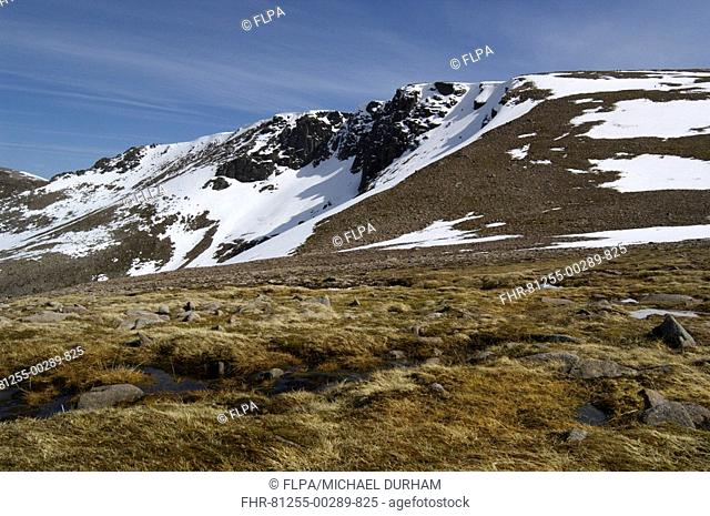 View of moorland habitat, mountain peaks with snow, Coire an Lochan, Cairngorms, Highlands, Scotland