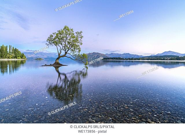 The lone tree in Lake Wanaka at dawn. Wanaka, Queenstown Lakes district, Otago region, South Island, New Zealand