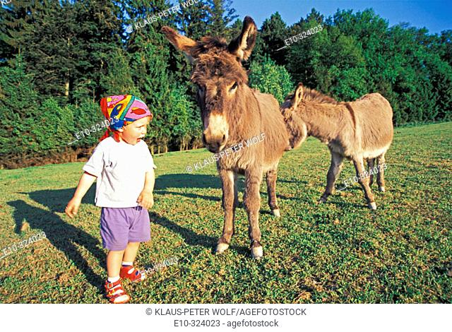 Little boy with two donkeys