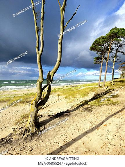 Germany, Mecklenburg-Western Pomerania, Fischland-Darß-Zingst, Darss peninsula, Western Pomerania Lagoon Area National Park, wild coastal scenery