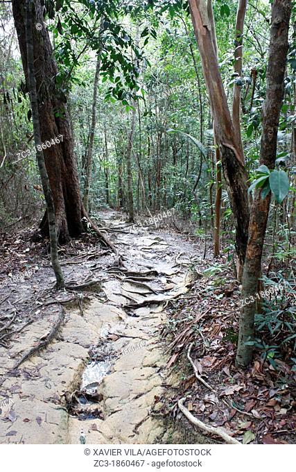 Path in the tropical jungle, national park, Pulau Pinang, Penang, Malaysia