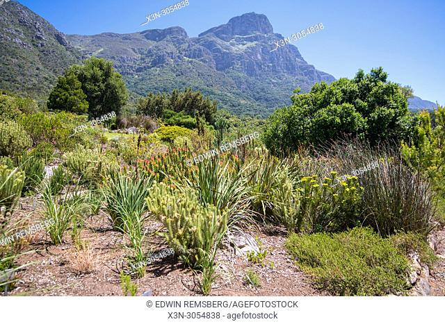 View of the fauna at the Kirstenbosch Botanical Gardens in Cape Town, South Africa