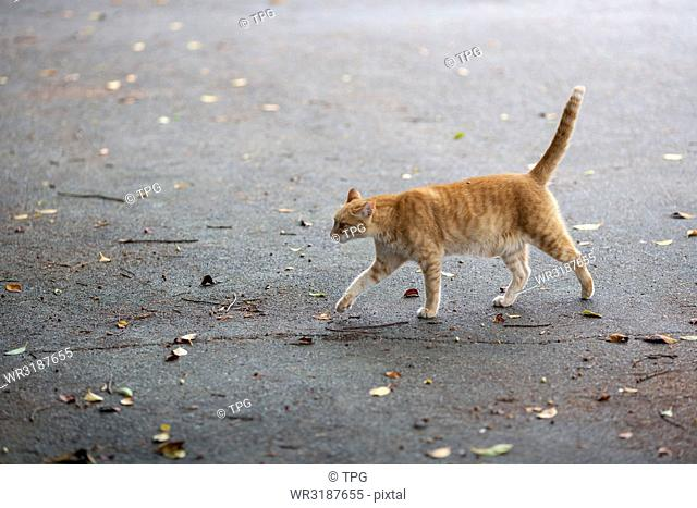 Cat walks through the roas