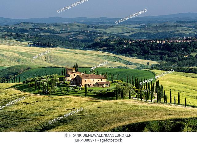 Typical green Tuscan landscape in Val d'Orcia with farm on hill, fields, cypresses and blue sky, Trequanda, Tuscany, Italy