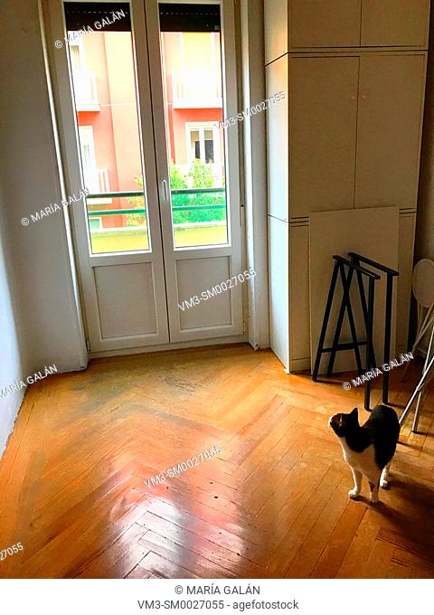 Cat alone in an empty room, looking at the closed window