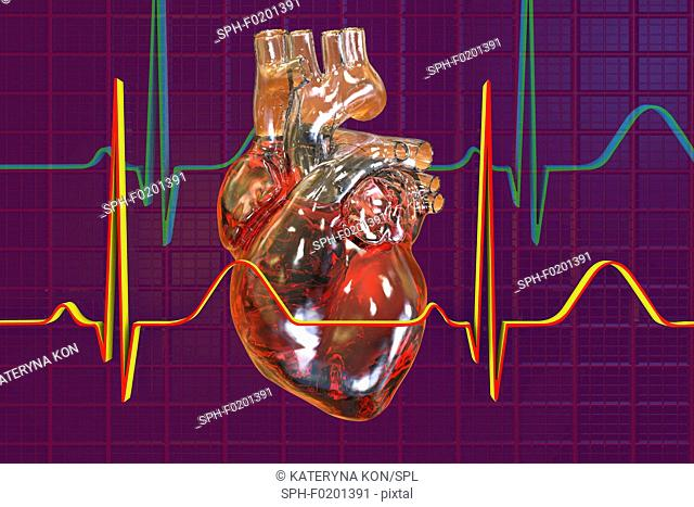 Heart with coronary vessels and ECG, illustration