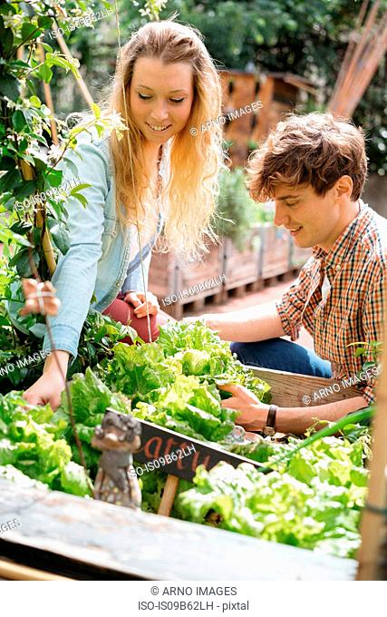 Young man and woman tending to plants in wooden troughs
