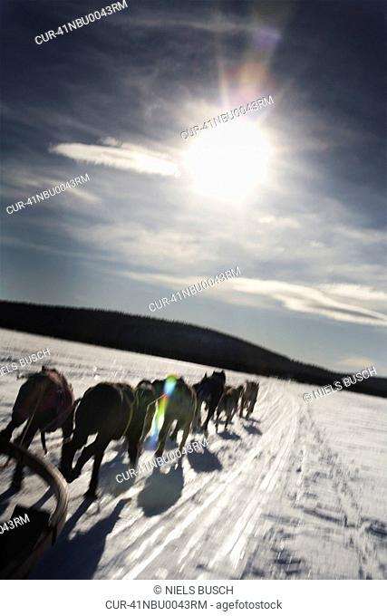 Dog team pulling sled in snowy landscape
