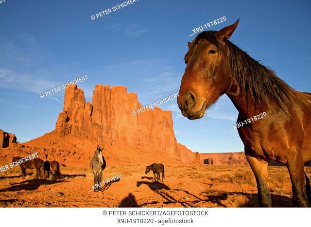 Navajo Indian horses at Monument Valley Navajo Tribal Park, United States of America, USA