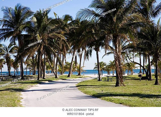 Palms on the way to the beach, Key Biscayne, Miami, Florida, Usa, Crandon Beach