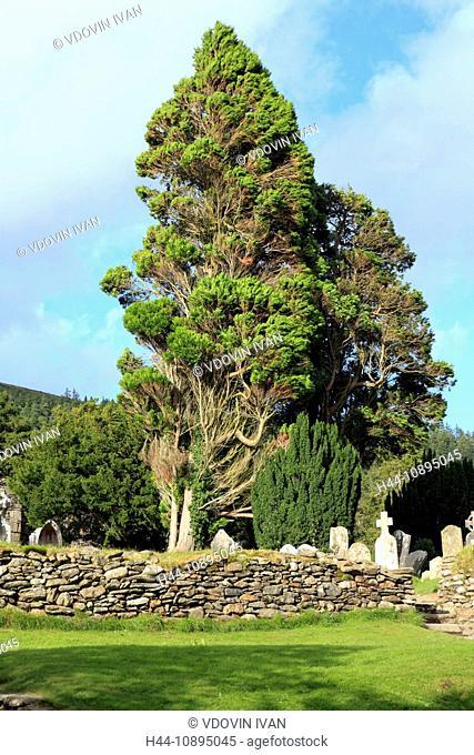 Eire, Europe, European, Ireland, Irish, Western Europe, travel destinations, Landscape, nature, Wicklow mountains, Cypress tree, Glendalough