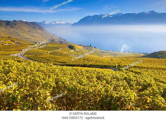 Epesses, Switzerland, Europe, canton Vaud, Lavaux, wine-growing area, UNESCO world heritage, lake, lake Geneva, vineyards, shoot