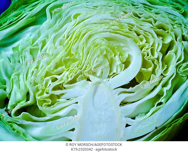 Green cabbage sliced open