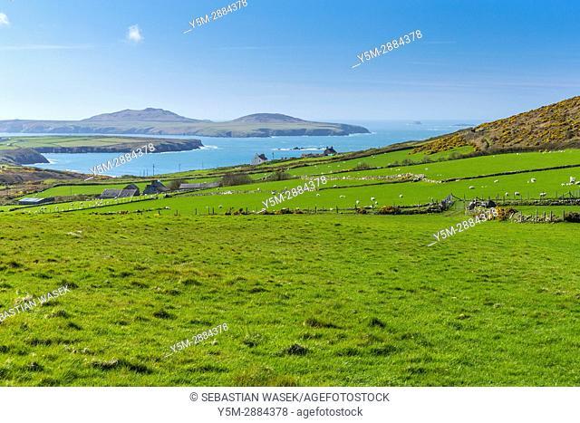 Wales Coast Path at St David's Head, Pembrokeshire Coast National Park,Wales, United Kingdom, Europe