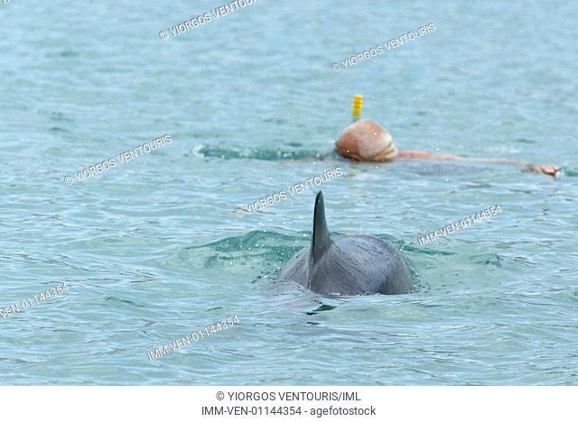 Man swimming with a dolphin. Loutraki, Corinthia, Peloponnese, Greece, Europe