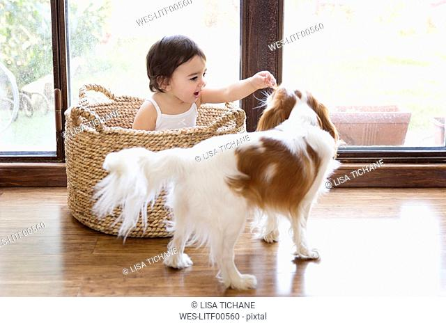 Toddler girl sitting in a basket in front of terrace door playing with the dog