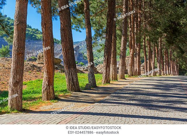 Row of pine trees along paved road with antique ruins on background, Turkey, Efes