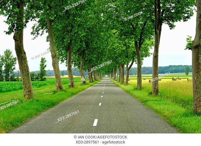 country road lined with plane trees near Mirande, Gers Department, New Aquitaine, France