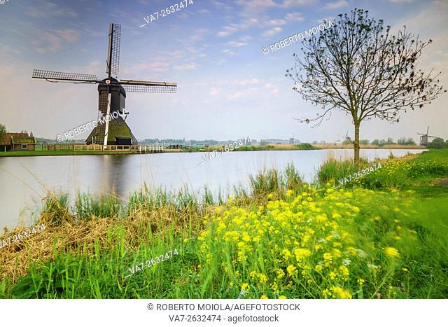 Yellow flowers frame the windmill reflected in the canal Kinderdijk Rotterdam South Holland Netherlands Europe