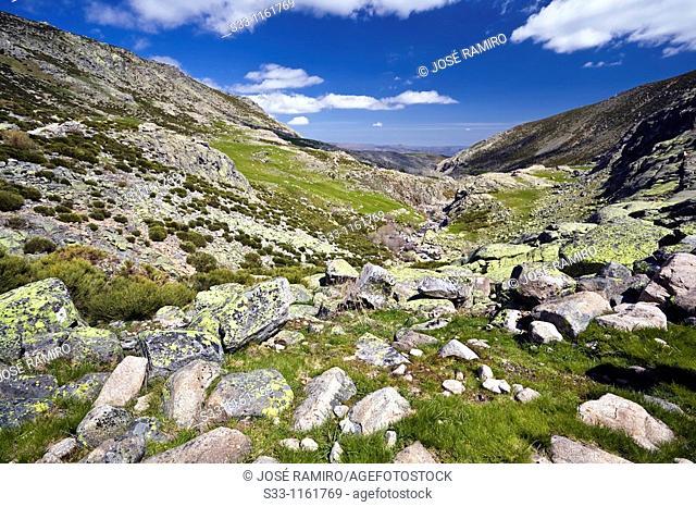 Galin Gómez Throat in the Sierra de Gredos Ávla Castilla León Spain