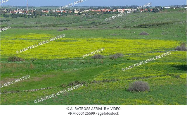 Approach over canola fields to Katzrin; also spelt Qatzrin; Qasrin; or Kazerin; the administrative center and largest town in the Golan Heights; Israel