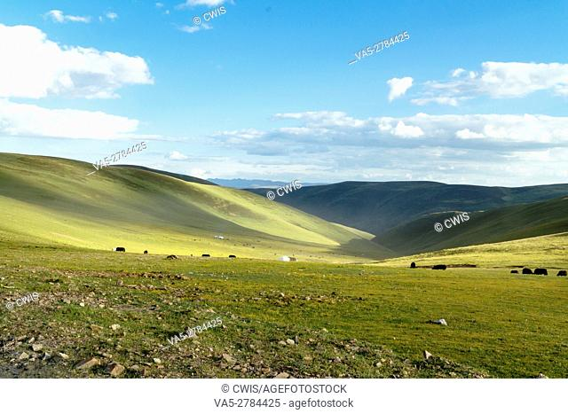 Ganzi Prefecture, Sichuan province, China - Beautiful landscape of Tibetan Plateau with many yak