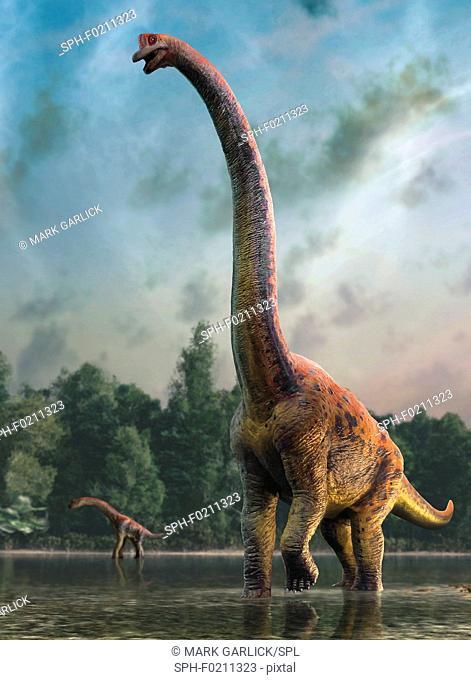 Giraffatitan, illustration