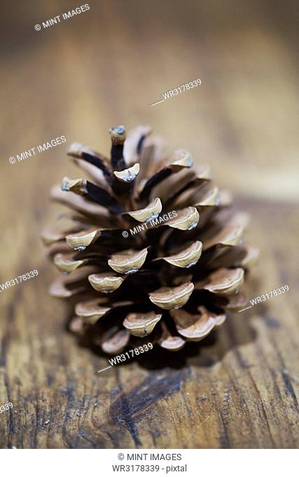 A brown dried pine cone on a wooden table
