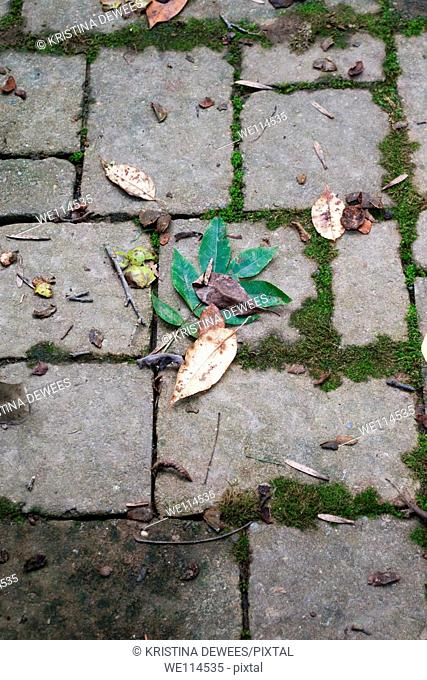 A variety of fallen leaves on some moss covered paving stones