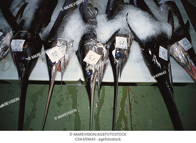 Fishing port of Vigo. Galicia. Spain. Sword fish. Xiphias gladius