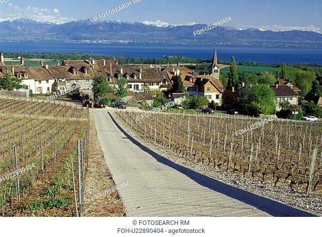 vineyard, Switzerland, La Cote, Vaud, Fechy, Lake Geneva, Alps, Europe, Vineyard road leads down to the village of Fechy covered with vineyards in the spring...