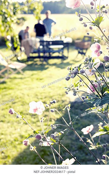 Flowers in garden, people on background