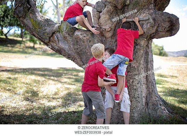 South Africa,Boys on field trip climbing tree